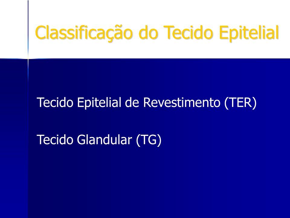 Classificação do Tecido Epitelial