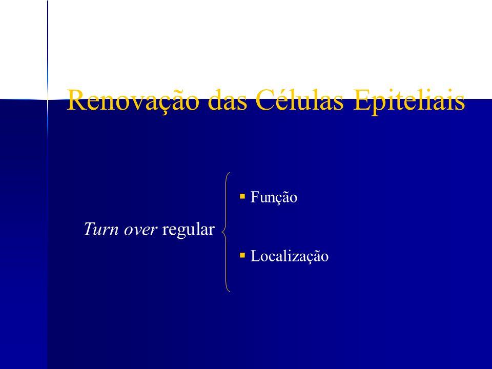 Renovação das Células Epiteliais