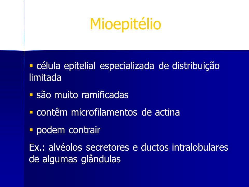 Mioepitélio célula epitelial especializada de distribuição limitada