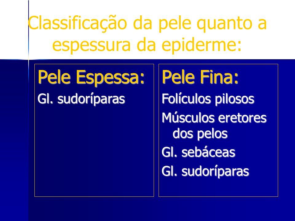 Classificação da pele quanto a espessura da epiderme: