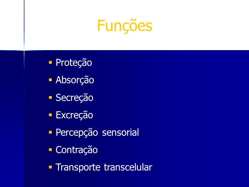 Funções Proteção Absorção Secreção Excreção Percepção sensorial