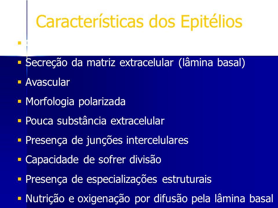 Características dos Epitélios