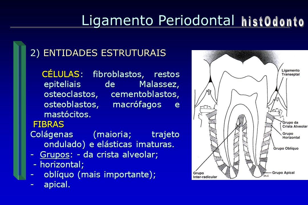 Ligamento Periodontal histOdonto