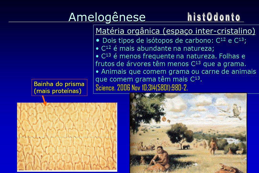 Amelogênese histOdonto Matéria orgânica (espaço inter-cristalino)