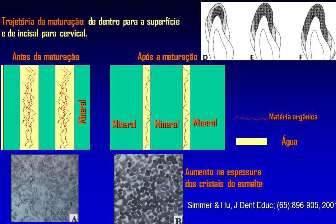 Trajetória da maturação: de dentro para a superfície