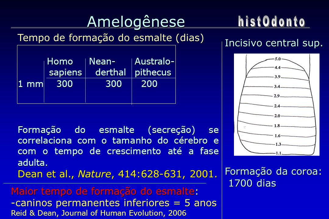 Amelogênese histOdonto Tempo de formação do esmalte (dias)