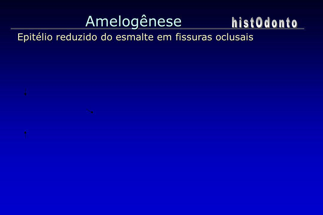 Amelogênese histOdonto