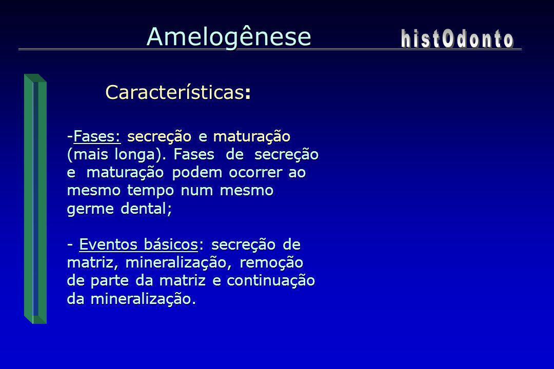 Amelogênese histOdonto Características:
