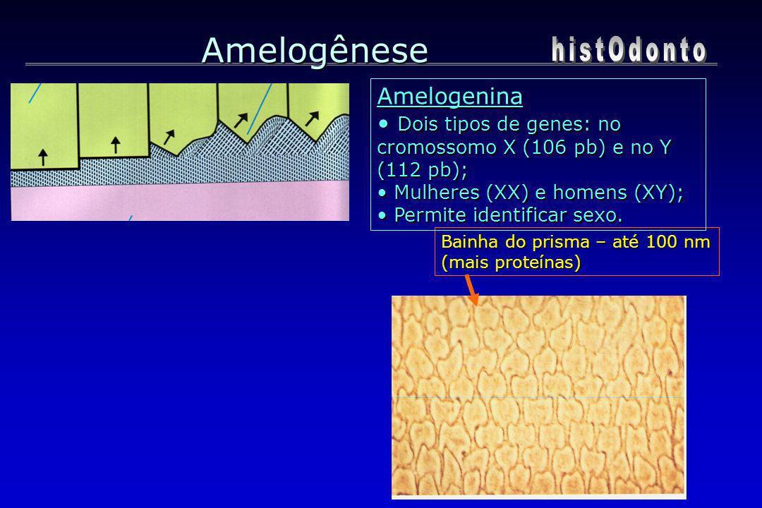 Amelogênese histOdonto Amelogenina
