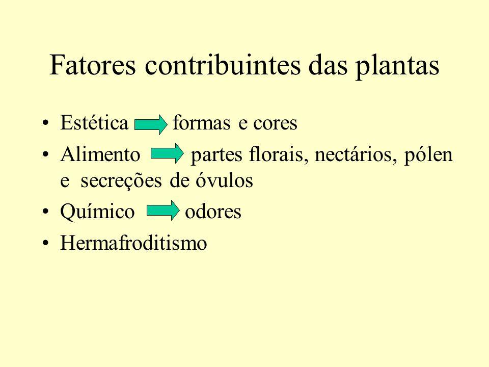 Fatores contribuintes das plantas