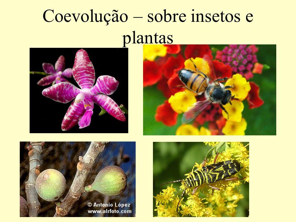 Coevolução – sobre insetos e plantas