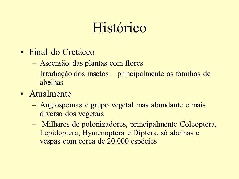 Histórico Final do Cretáceo Atualmente Ascensão das plantas com flores