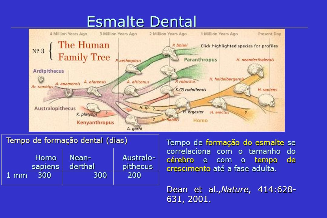 Esmalte Dental Dean et al.,Nature, 414: , 2001.