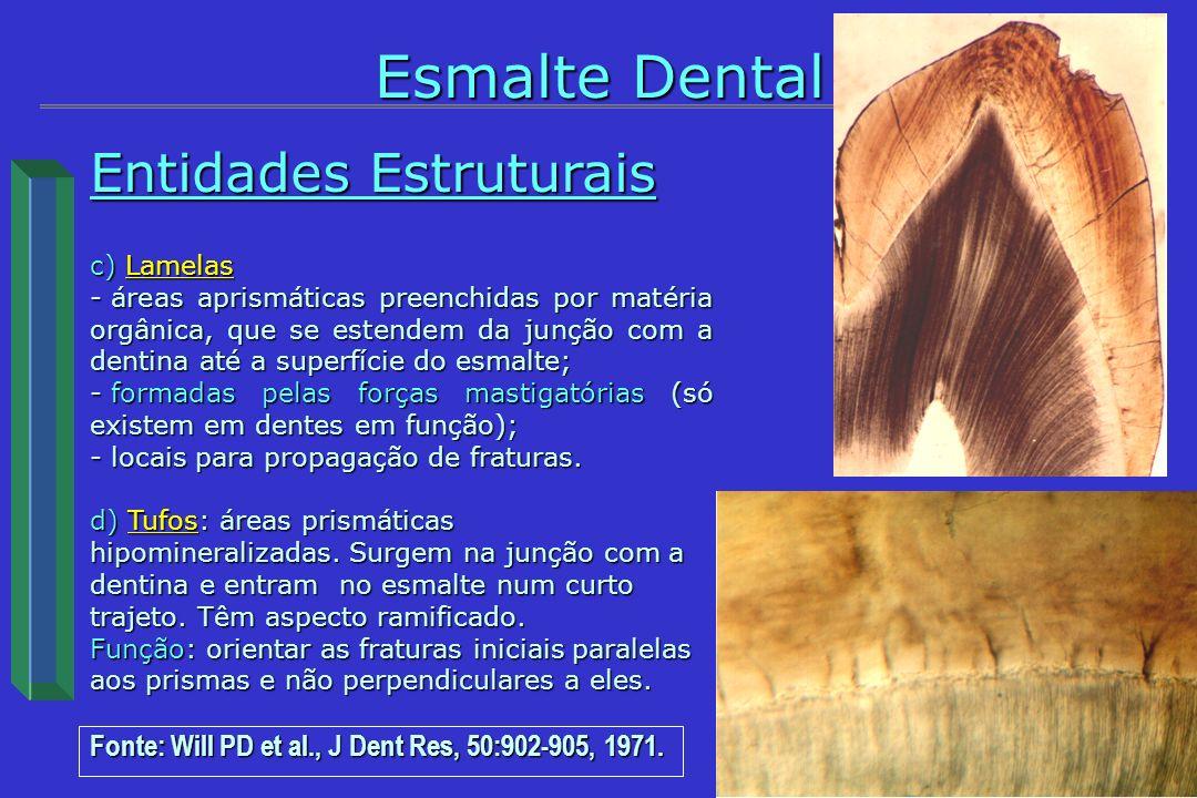 Esmalte Dental histOdonto Entidades Estruturais
