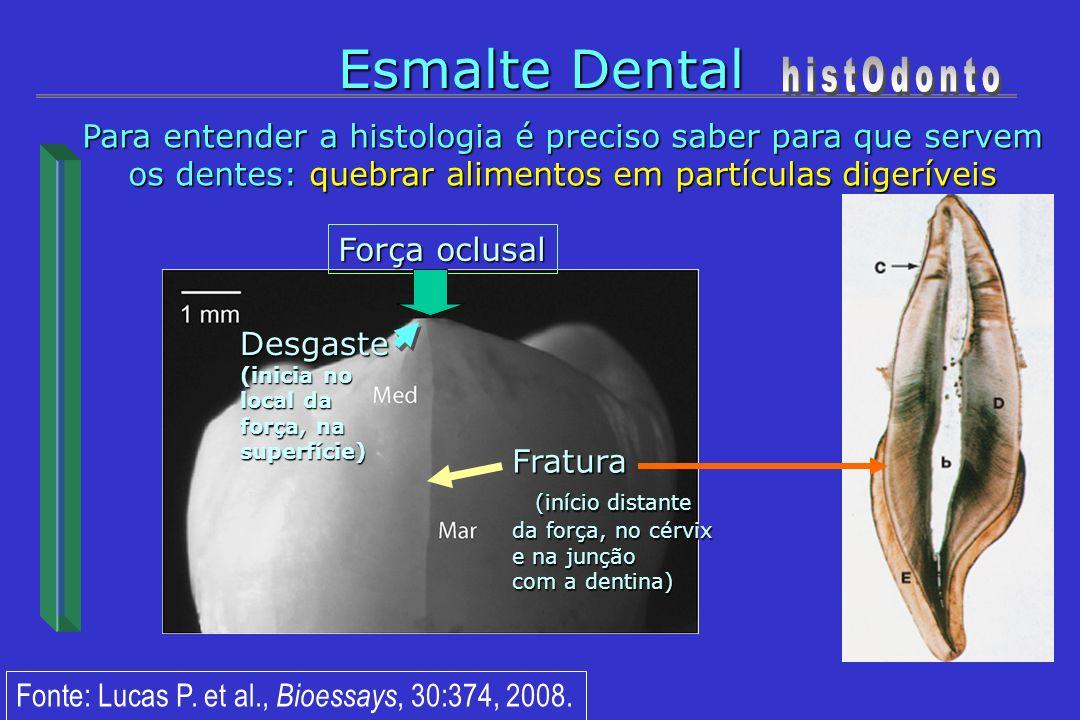 Esmalte Dental histOdonto