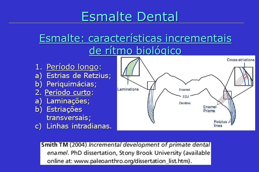 Esmalte: características incrementais de rítmo biológico