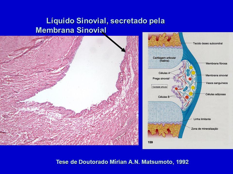 Tese de Doutorado Mírian A.N. Matsumoto, 1992