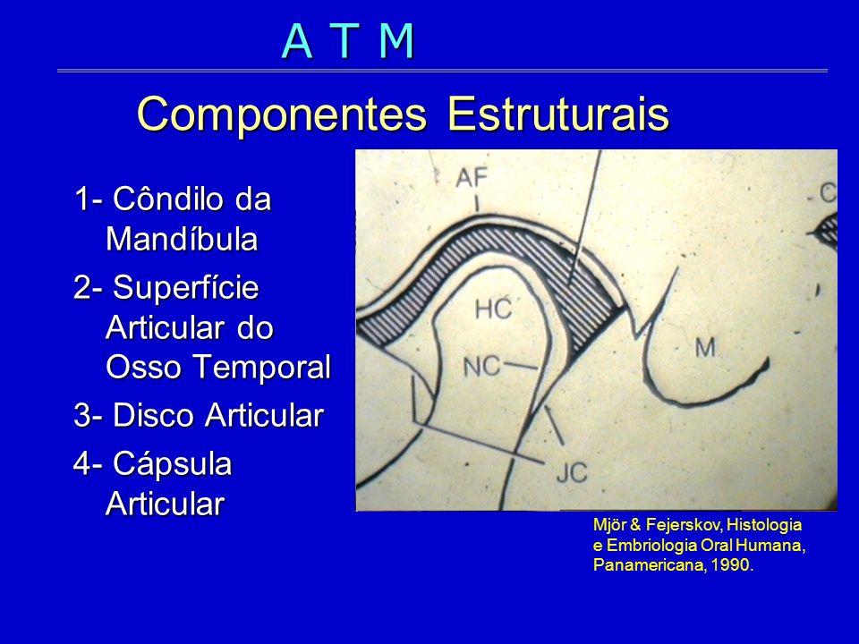 Componentes Estruturais