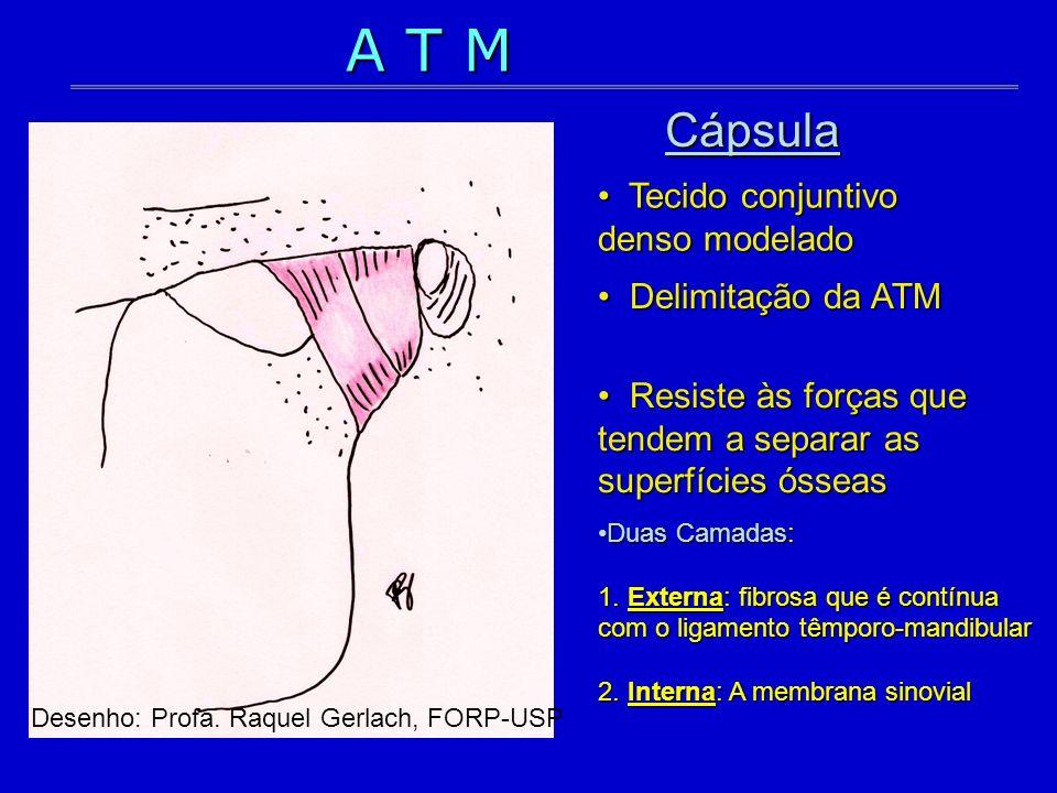 A T M Cápsula Tecido conjuntivo denso modelado Delimitação da ATM