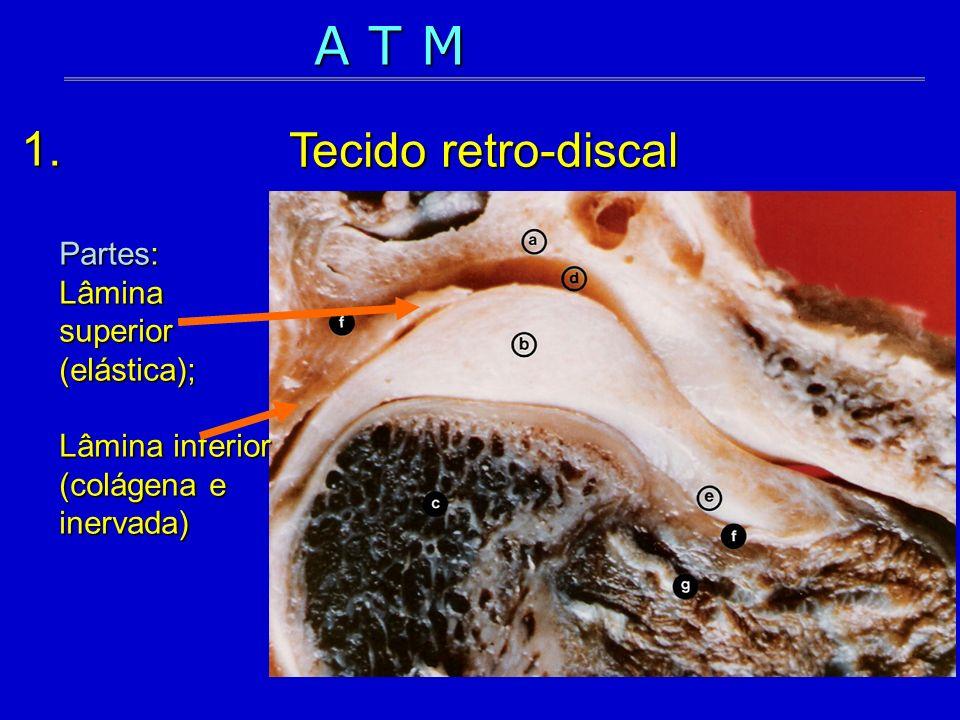 A T M Tecido retro-discal