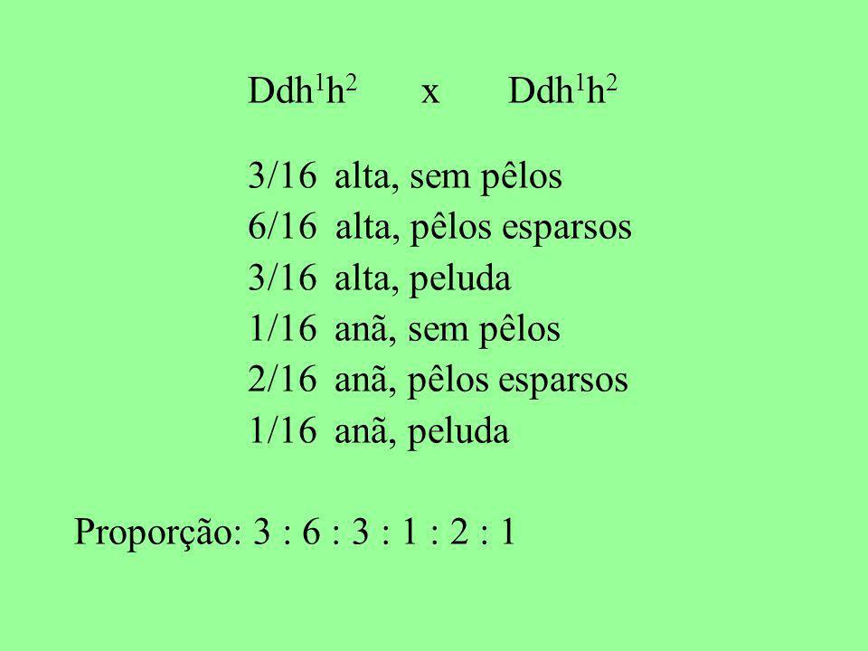 Ddh1h2 x Ddh1h2 3/16 alta, sem pêlos. 6/16 alta, pêlos esparsos. 3/16 alta, peluda. 1/16 anã, sem pêlos.