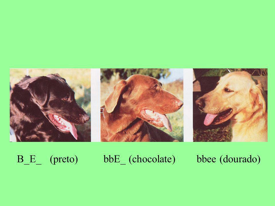 B_E_ (preto) bbE_ (chocolate) bbee (dourado)
