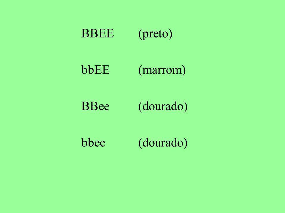 BBEE (preto) bbEE (marrom) BBee (dourado) bbee (dourado)
