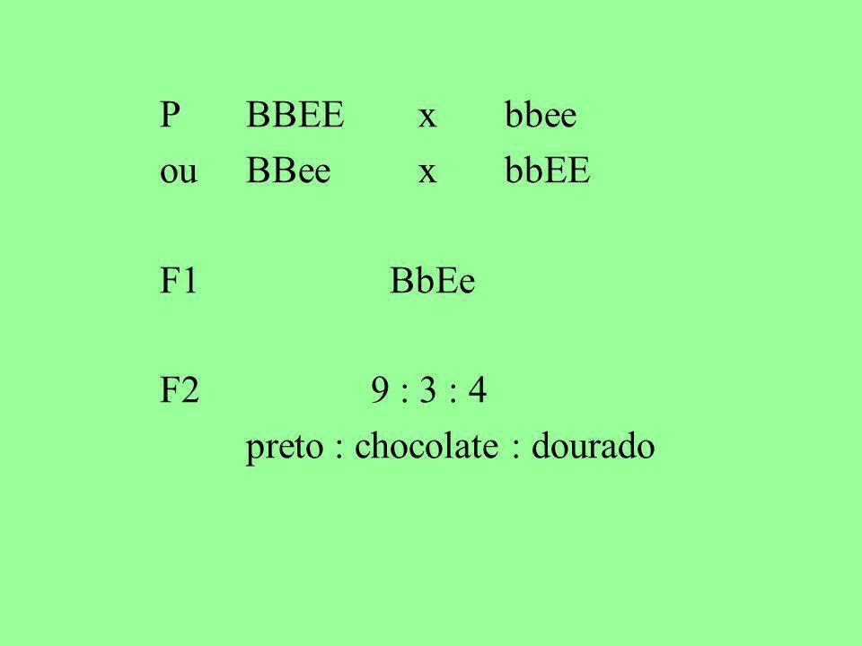 P BBEE x bbee ou BBee x bbEE F1 BbEe F2 9 : 3 : 4 preto : chocolate : dourado