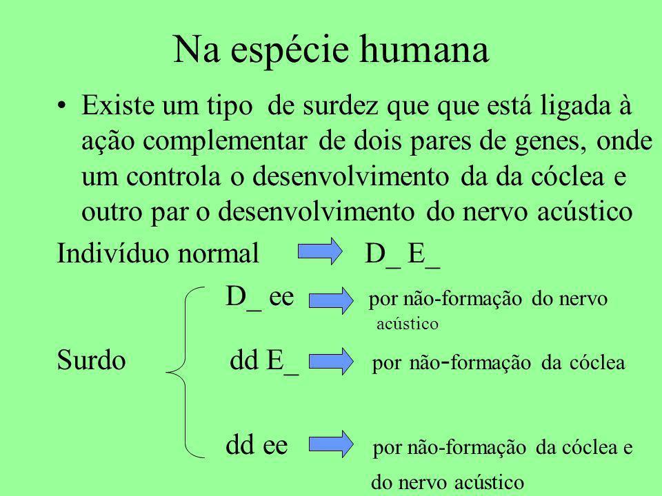 Na espécie humana