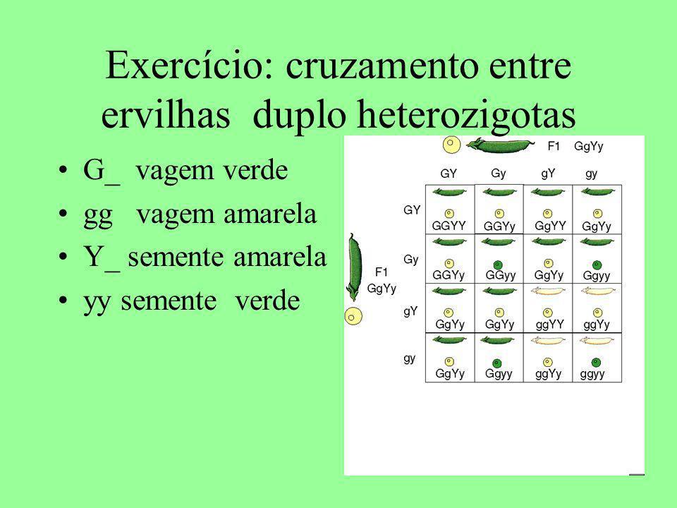 Exercício: cruzamento entre ervilhas duplo heterozigotas