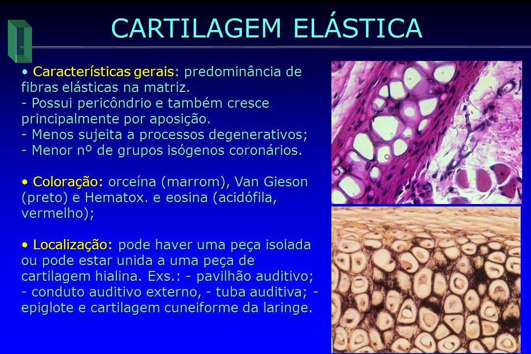 CARTILAGEM ELÁSTICA Características gerais: predominância de fibras elásticas na matriz.