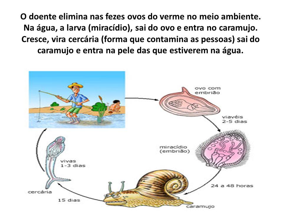 O doente elimina nas fezes ovos do verme no meio ambiente