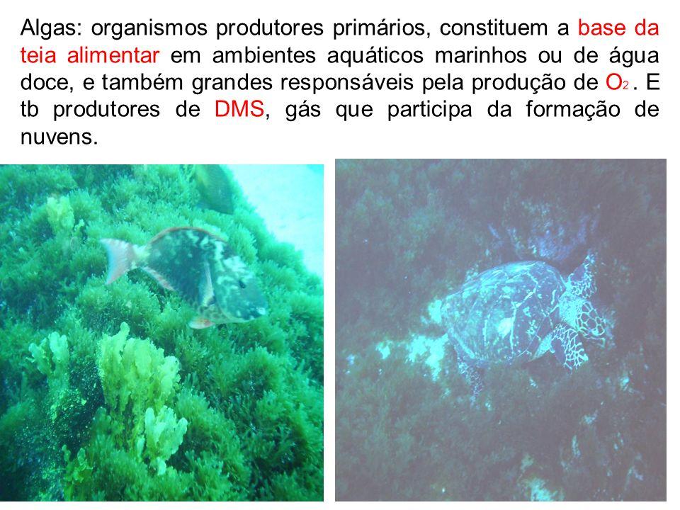 Algas: organismos produtores primários, constituem a base da teia alimentar em ambientes aquáticos marinhos ou de água doce, e também grandes responsáveis pela produção de O2 .