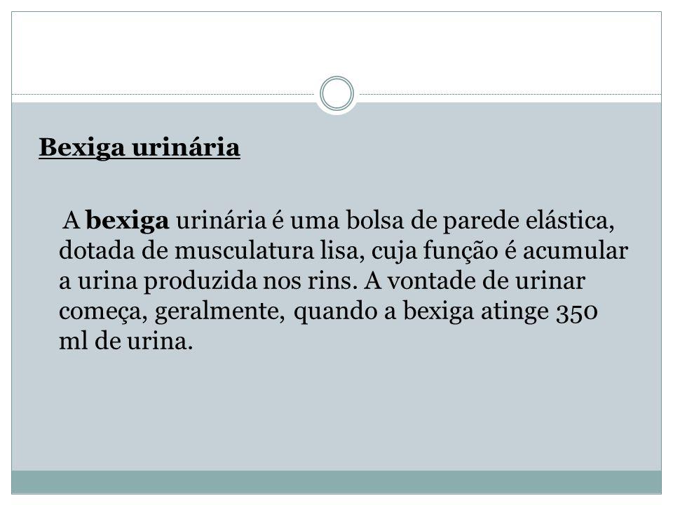 Bexiga urinária