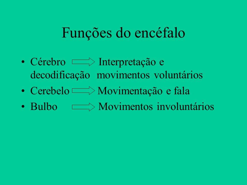 Funções do encéfalo Cérebro Interpretação e decodificação movimentos voluntários. Cerebelo Movimentação e fala.