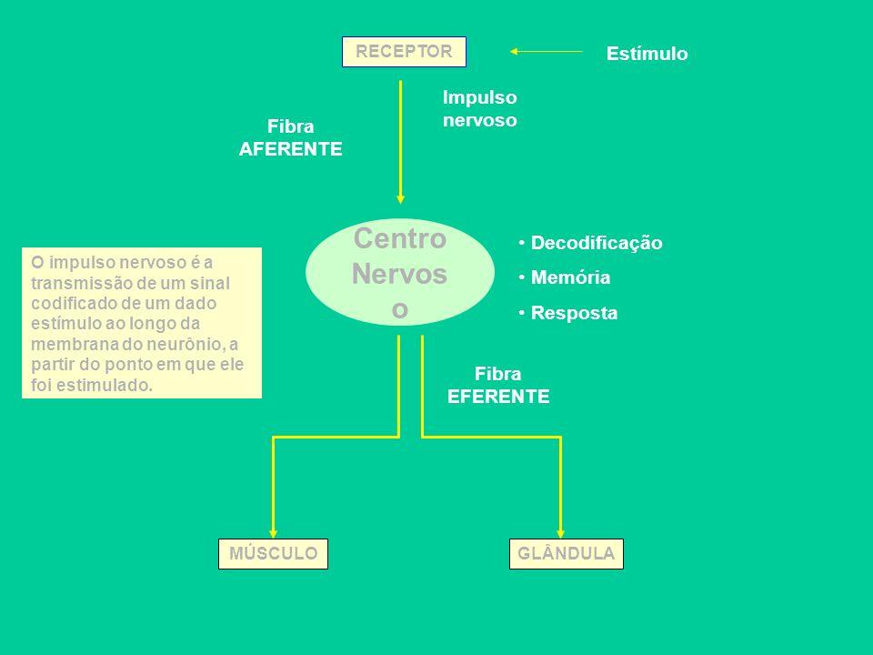 Centro Nervoso Estímulo Impulso nervoso Fibra AFERENTE Decodificação