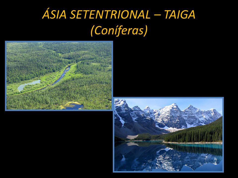 ÁSIA SETENTRIONAL – TAIGA (Coníferas)