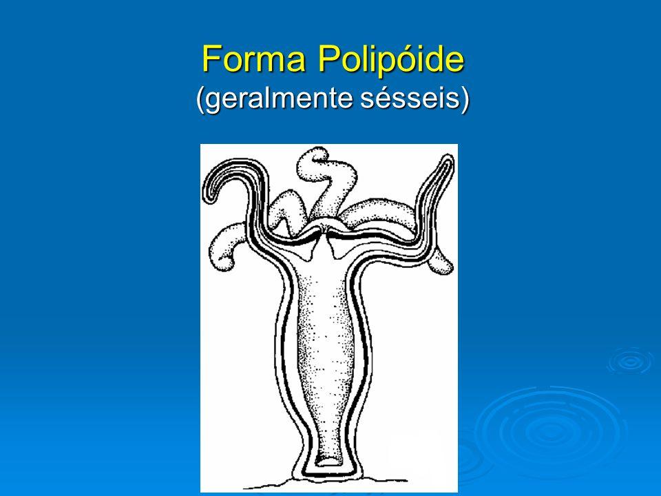 Forma Polipóide (geralmente sésseis)