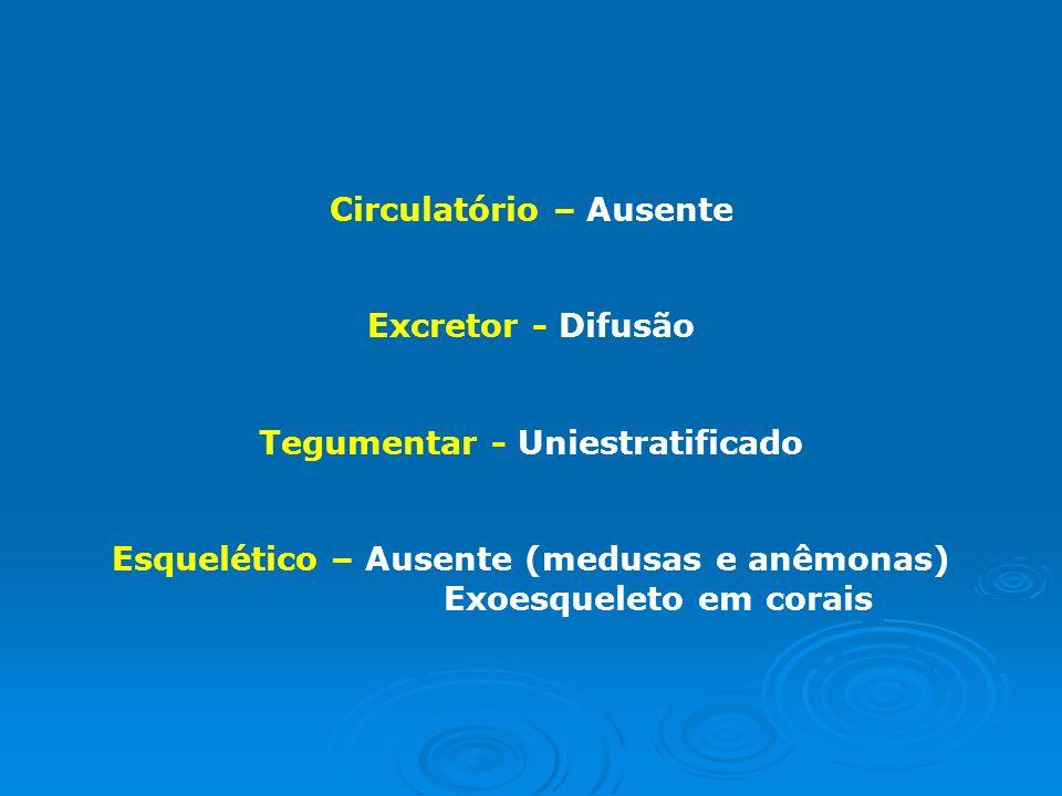 Circulatório – Ausente