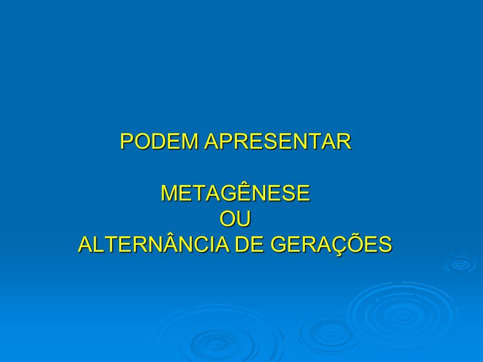 PODEM APRESENTAR METAGÊNESE OU ALTERNÂNCIA DE GERAÇÕES