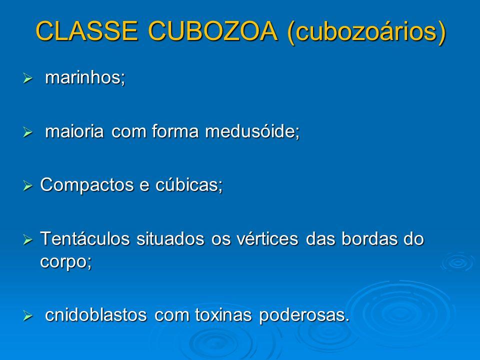CLASSE CUBOZOA (cubozoários)