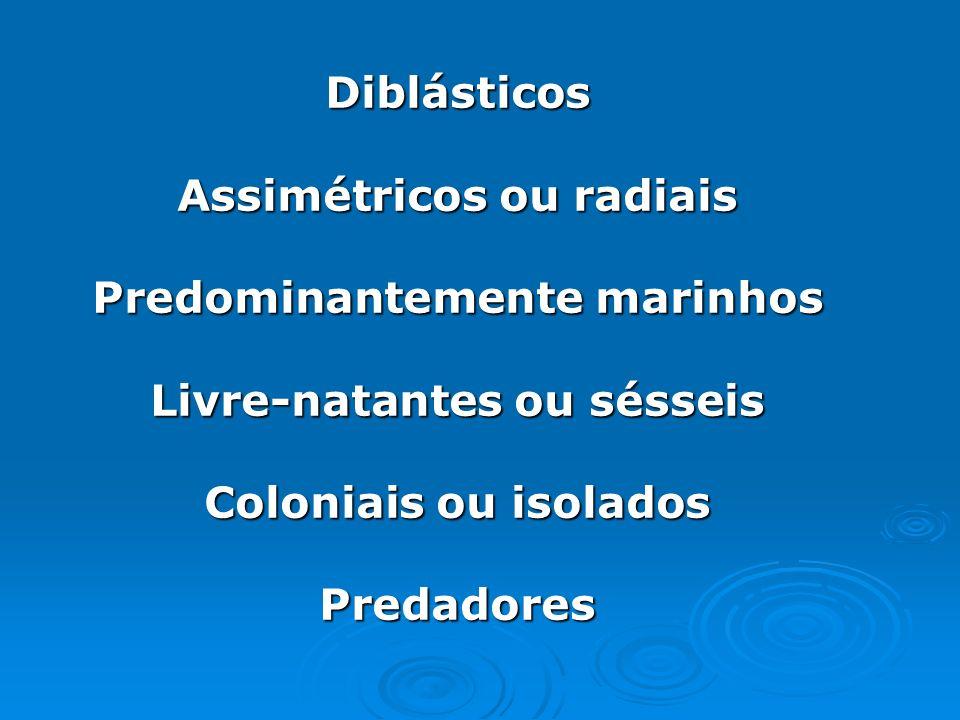 Assimétricos ou radiais Predominantemente marinhos