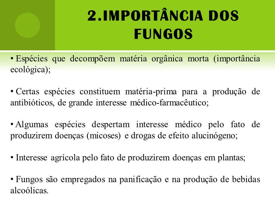 2.IMPORTÂNCIA DOS FUNGOS