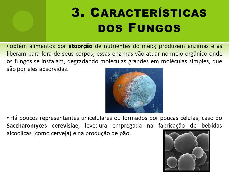 3. Características dos Fungos