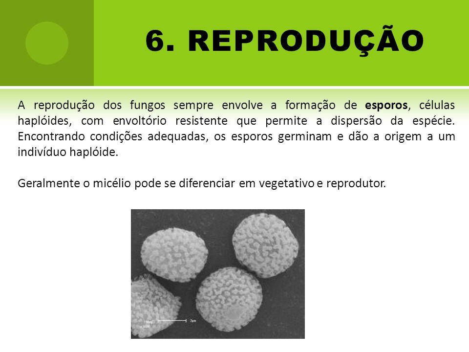 6. REPRODUÇÃO