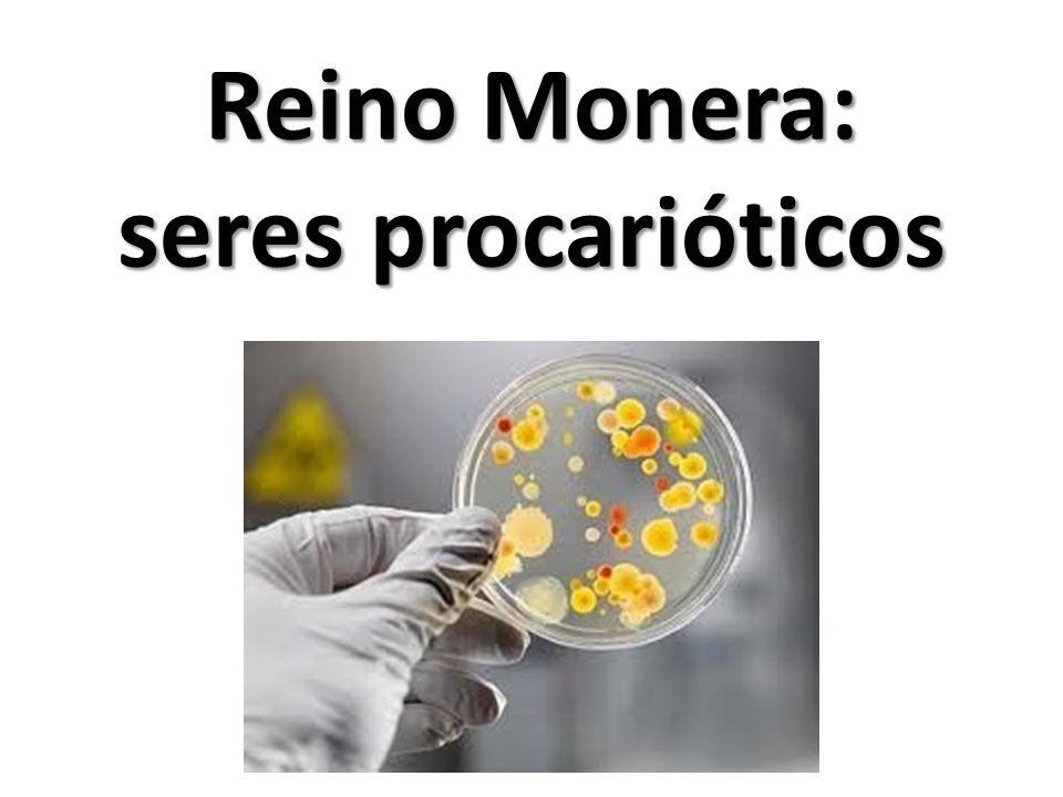 Reino Monera: seres procarióticos