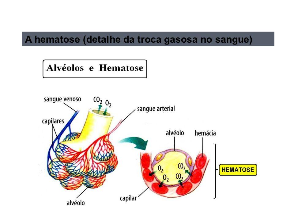 A hematose (detalhe da troca gasosa no sangue)