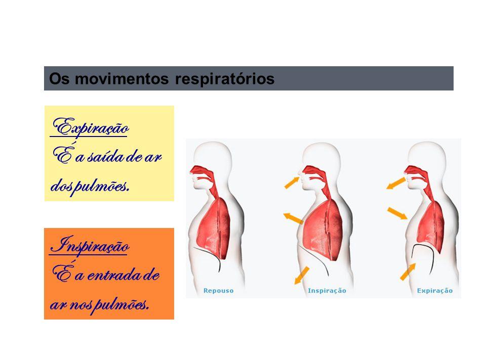 Expiração É a saída de ar dos pulmões.