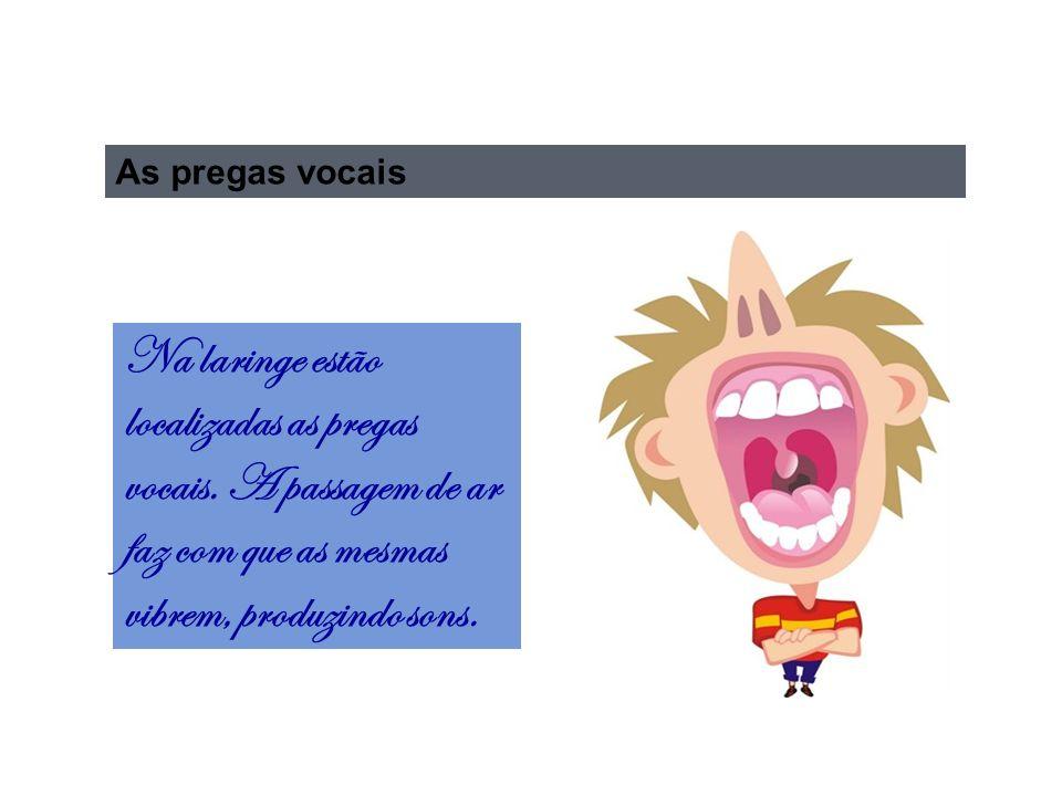 As pregas vocais Na laringe estão localizadas as pregas vocais.