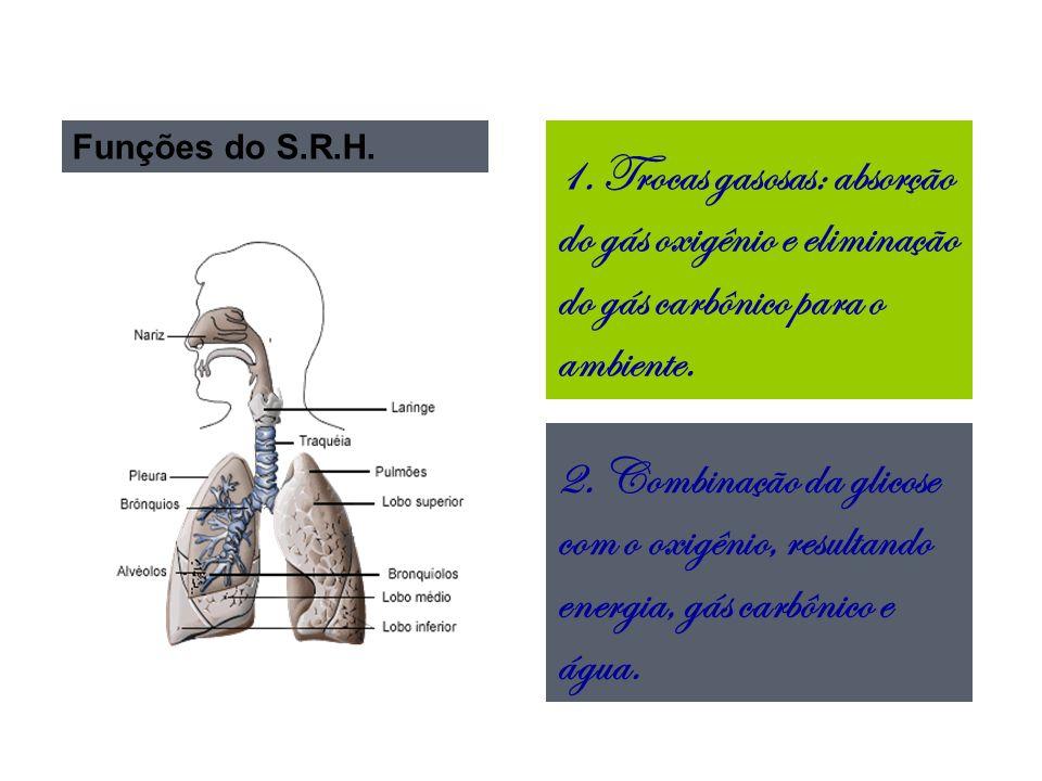 Funções do S.R.H. 1. Trocas gasosas: absorção do gás oxigênio e eliminação do gás carbônico para o ambiente.